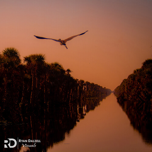 Image of a bird flying over a canal in a Florida swamp taken by Dr. Ryan Dalzell of Ryan Dalzell Visuals.